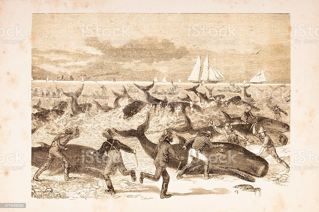 Engraving masacre of whales at beach from 1881 vector art illustration