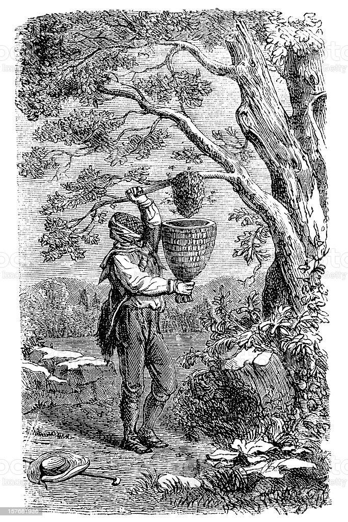 Gravure de Apiculteur châtiments au miel - Illustration vectorielle