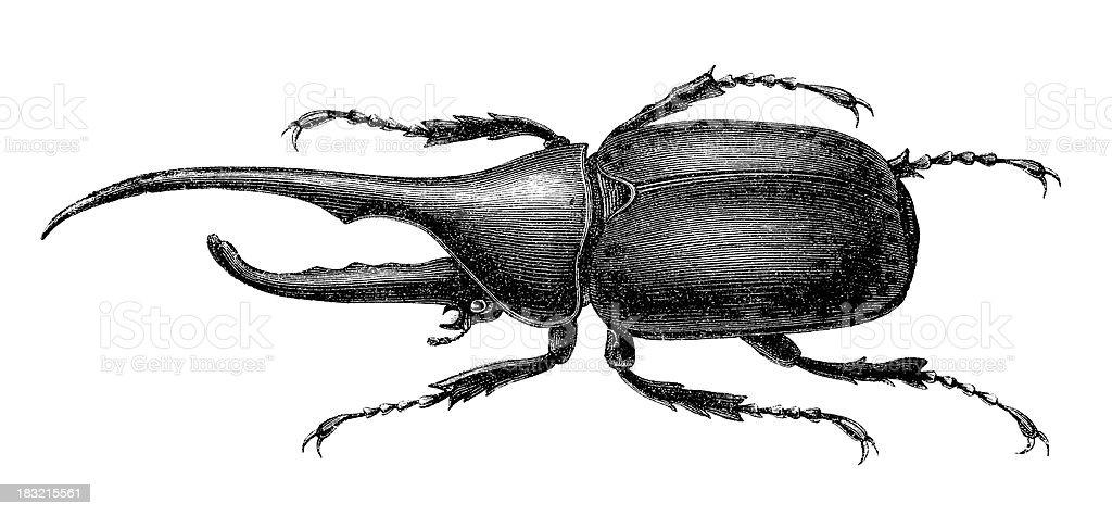 Ilustración de Grabado De Escarabajo Hércules En 1870 y más banco de ...