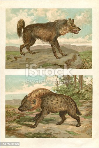 istock Engraving spotted and striped hyena in Africa 547504268