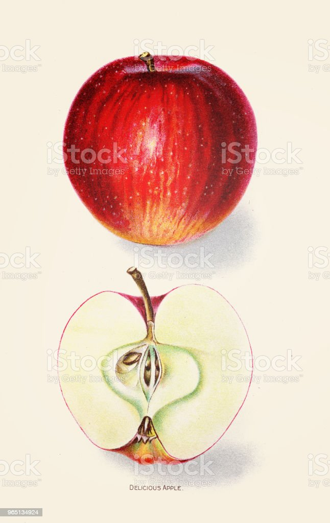 Ensee apple illustration 1892 royalty-free ensee apple illustration 1892 stock illustration - download image now