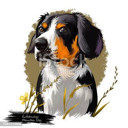 Entlebucher Mountain Dog, Entlebucher Sennenhund dog digital art illustration isolated on white background. Switzerland origin guardian dog. Cute pet hand drawn portrait. Graphic clip art design