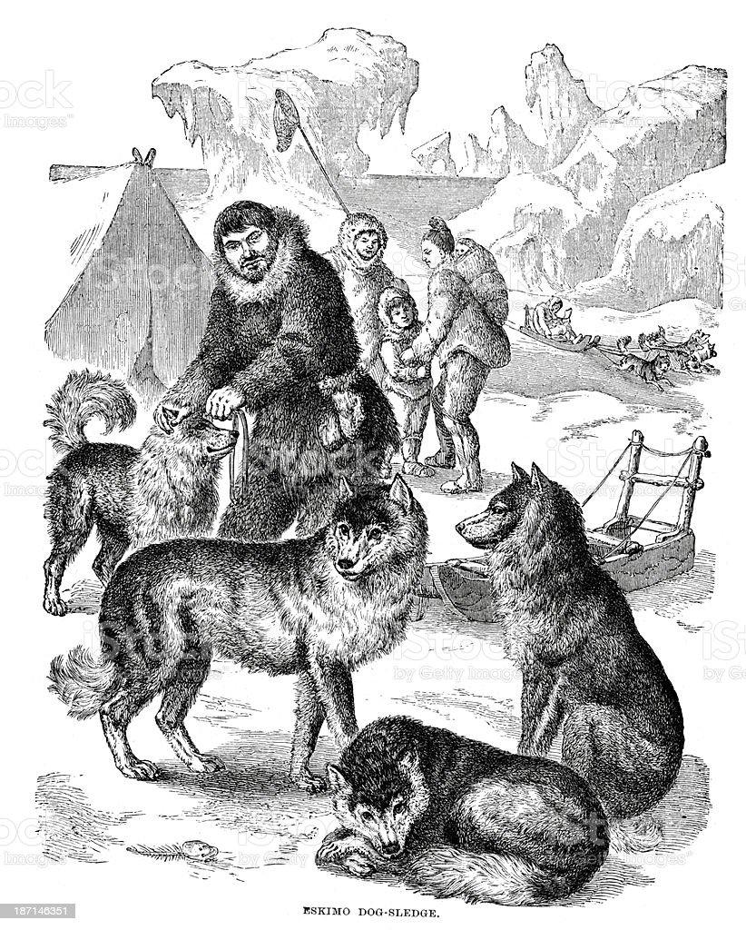 Eskimo dog sledge royalty-free stock vector art