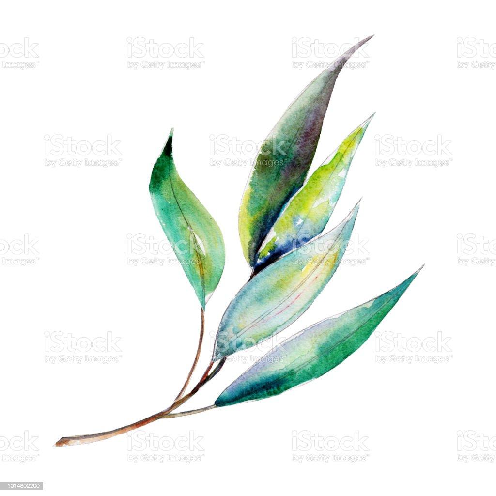 branche deucalyptus illustration aquarelle objet isolé sur fond