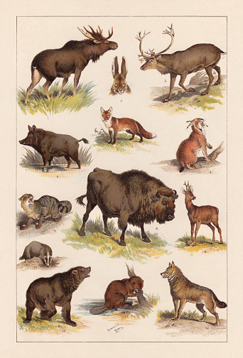 European wild mammals, lithograph, published in 1893