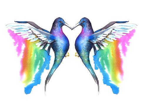 exotic birds. watercolor sketch of a hummingbird
