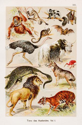 Exotic family Chromolithography 1899