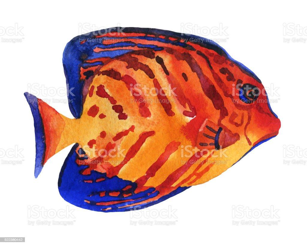 Exotic fish isolated on white background vector art illustration