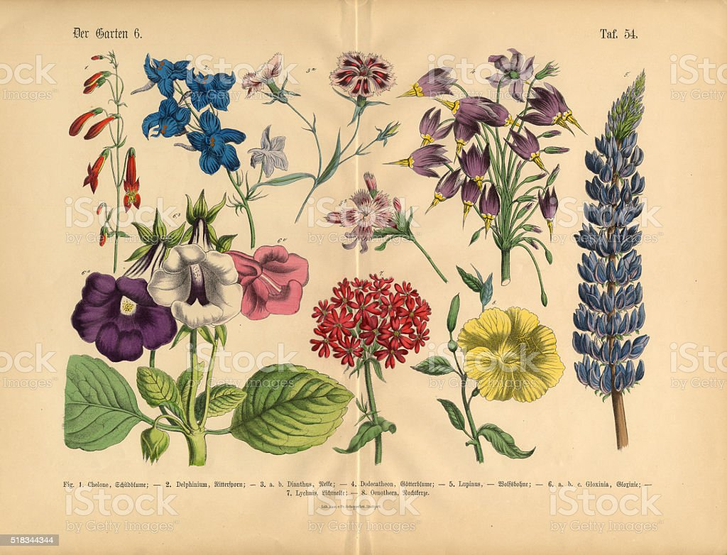 Exotic Flowers Of The Garden Victorian Botanical Illustration Royalty Free