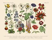 エキゾチックな花の庭園、ビクトリア様式の植物イラストレーション