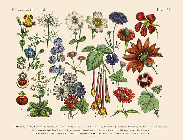 exotic flowers of the garden, victorian botanical illustration - wildflowers stock illustrations, clip art, cartoons, & icons