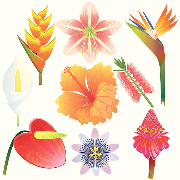 bildbanksillustrationer, clip art samt tecknat material och ikoner med exotic tropical flowers collection - amaryllis