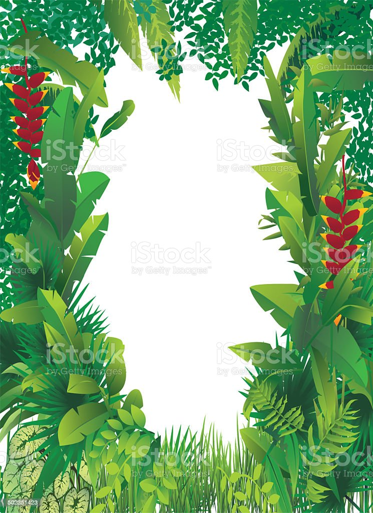 exotic tropical forest vector art illustration