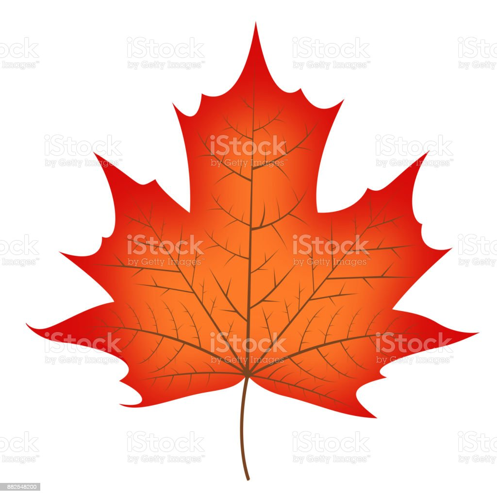 Fall leaf - illustration vector art illustration