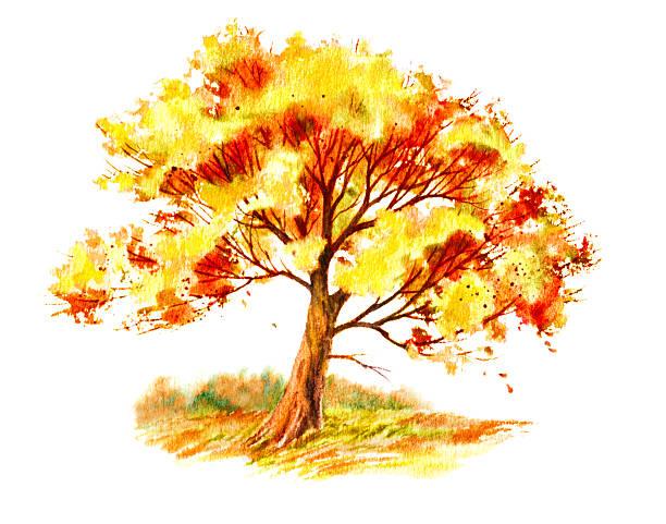 Fall Tree in a Field vector art illustration