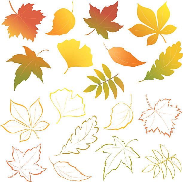 Falling leaves set Vector autumn leaves - design elements. maple leaf stock illustrations
