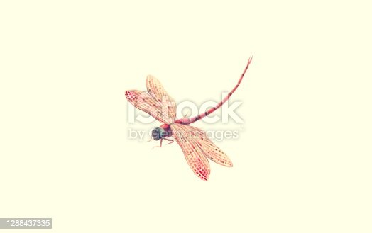 istock Fantasy flying dragonfly isolated on a white background. hand-drawn an illustration. cute animal character, painting artwork, art, freedom and dream concept . 1288437335