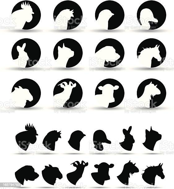 Farm animal icons illustration id165794763?b=1&k=6&m=165794763&s=612x612&h=xksj7oxqkw4sftcleet1ycidjppqilyu6dknf5lzfjm=