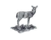 istock Female Deer Portrait 471202819