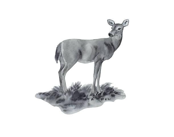 Female Deer Portrait vector art illustration