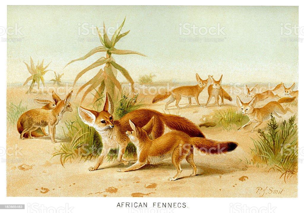 Fennec Fox (Vulpes zerda) vector art illustration