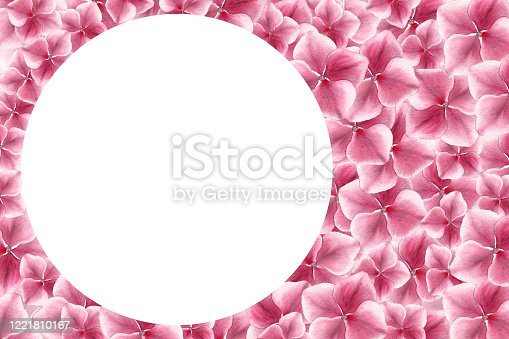 Illustration with festive pink floral background for mothers day celebration, realistic pink hydrangea flower frame, botanic watercolor illustration with copy space