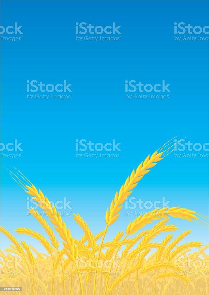 Campo ilustración de campo y más banco de imágenes de agricultura libre de derechos
