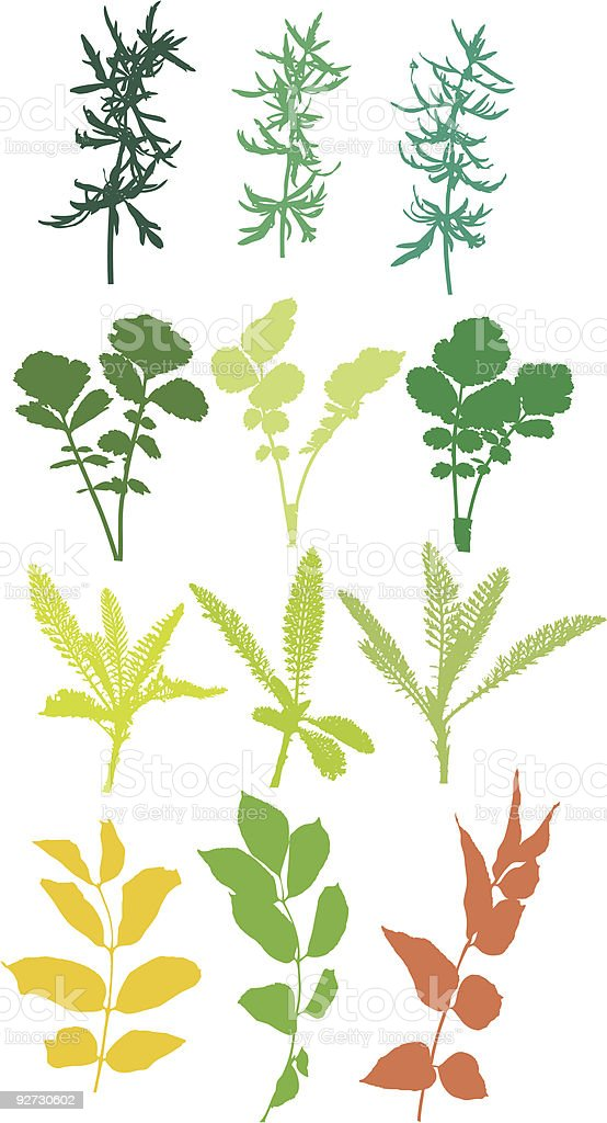 Field  plants, herbs, leaves - vector, traced royalty-free stock vector art
