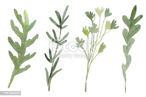 istock Fines Herbes. Traditional French herb blend for cooking: arugula, parsley, rosemary, oregano isolated on white. Watercolor 1191264422