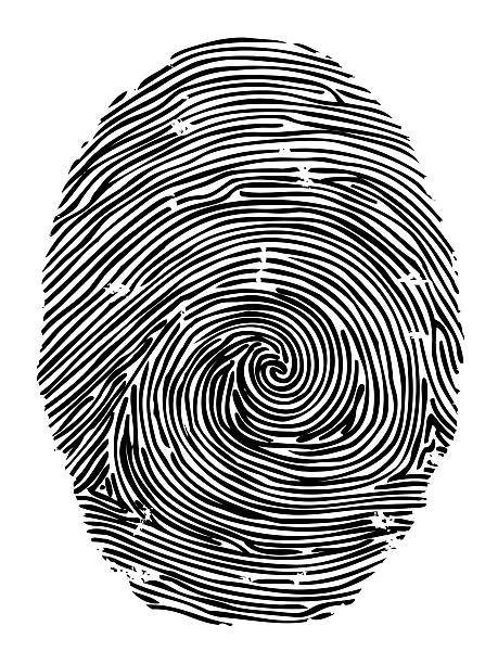 Fingerprint, with clipping path Human fingerpint, used for security and identification, printed with black ink on white background, isolated on white with clipping path. Fingerprint does not belong to an actual person but is a work of art crime scene stock illustrations