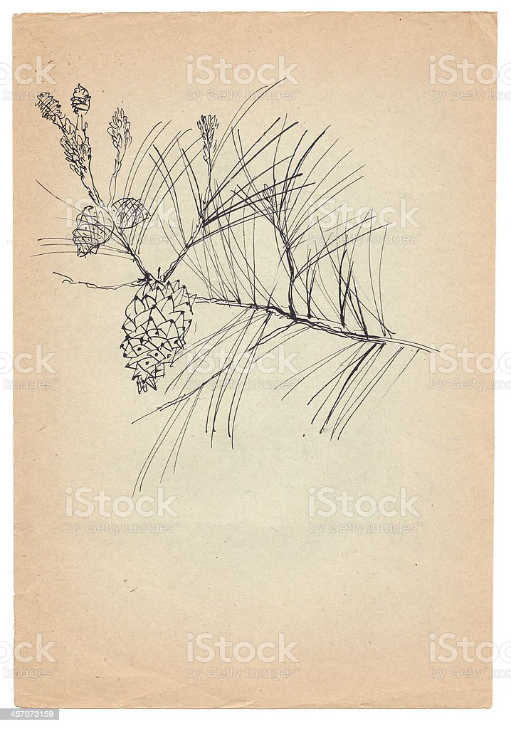 fir-cone pen drawn on old paper royalty-free stock vector art