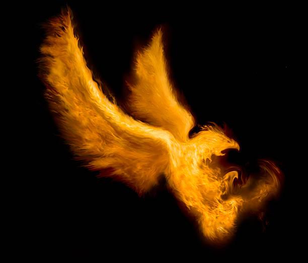 fire bird vector art illustration