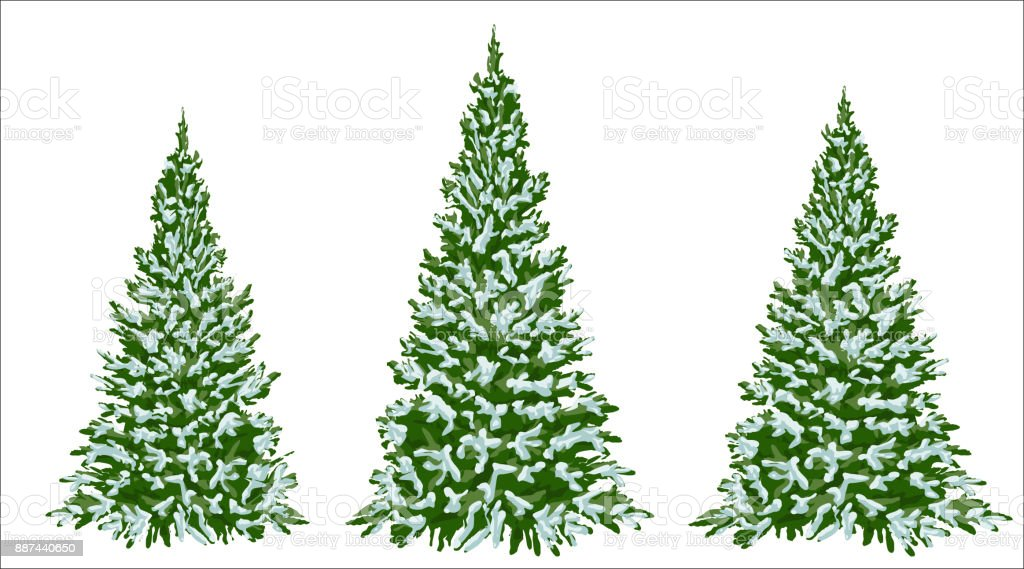 Christmas Trees Drawing.Firs Set Of Beautiful Christmas Trees In The Snow Christmas