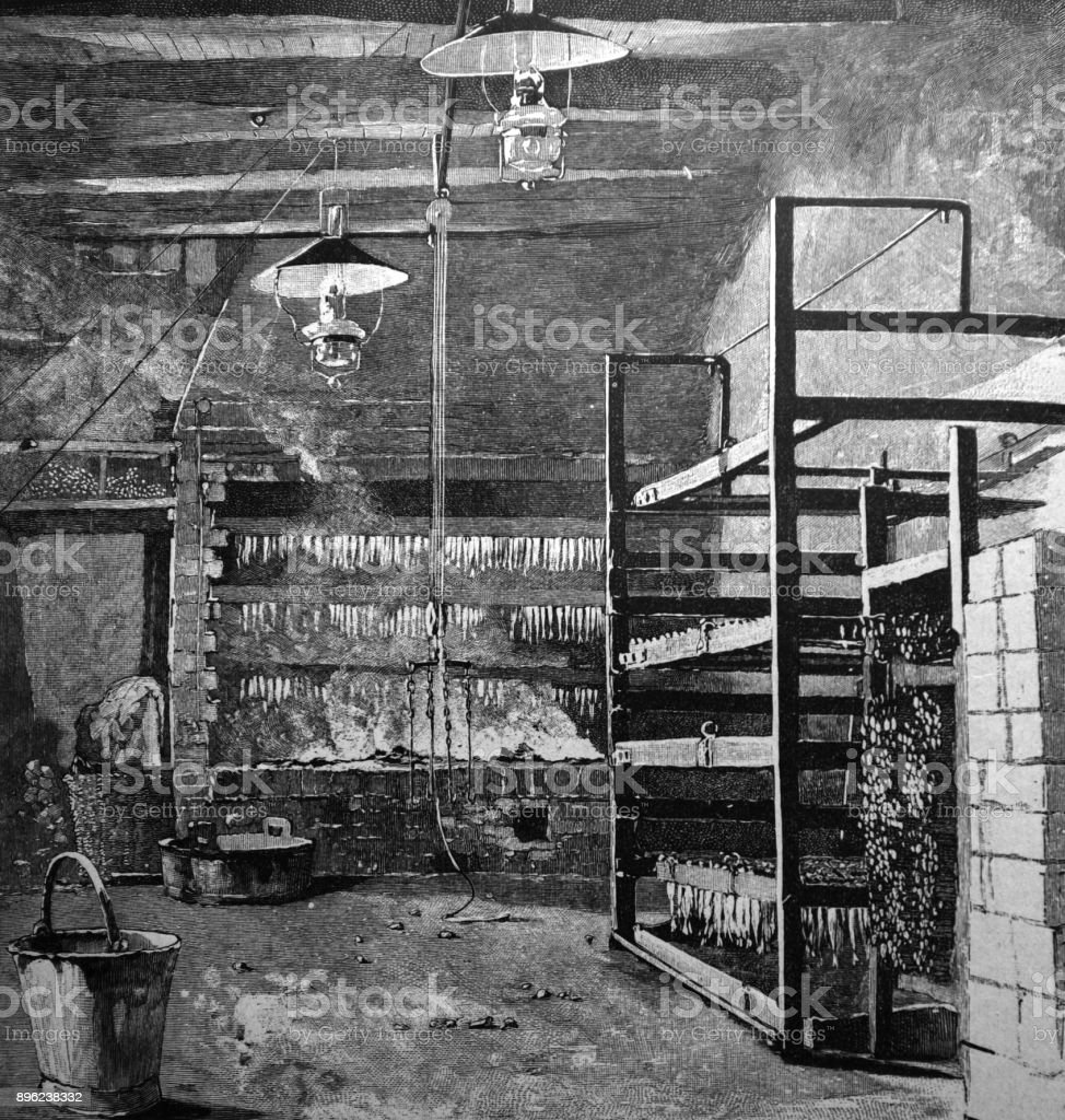 Fish Drying Farm In Basement 1896 Stock Vector Art & More