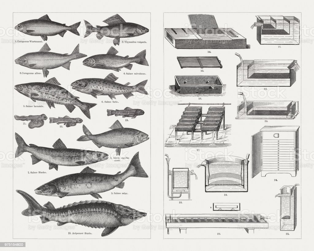 Fish farming, species and breeding equipment, wood engravings, published 1897 vector art illustration