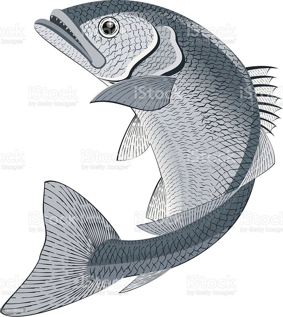 Fish vector art illustration