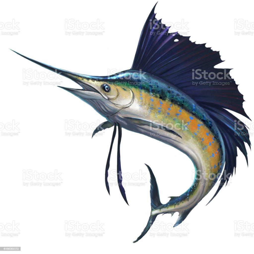 royalty free marlin clip art vector images illustrations istock rh istockphoto com Sailfish Anatomy Sailfish Graphics