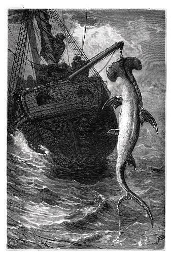 Fisherman on boat fishing hammerhead shark 1870