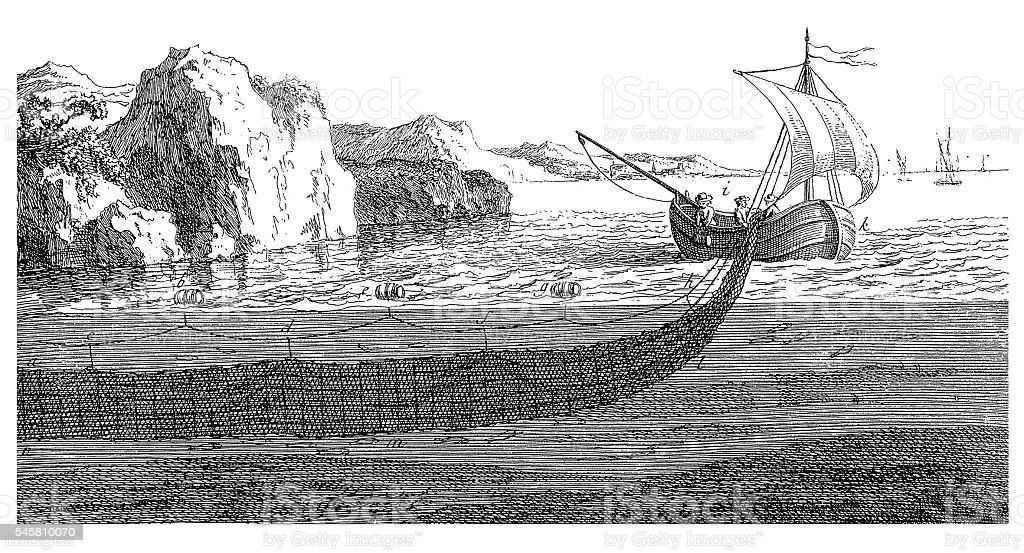 Fishing herring (antique engraving) vector art illustration