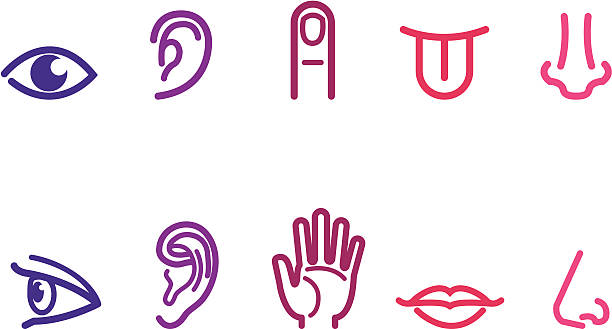 five senses ikon - nos stock illustrations