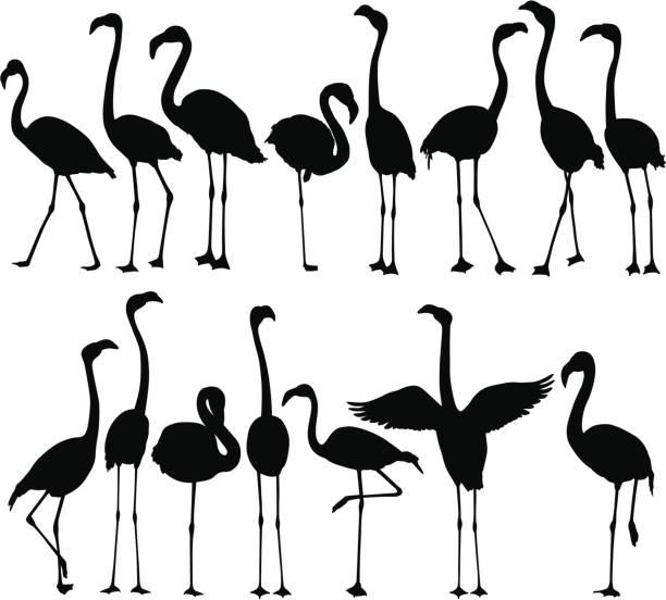 flamingo silhouettes - flamingo stock illustrations