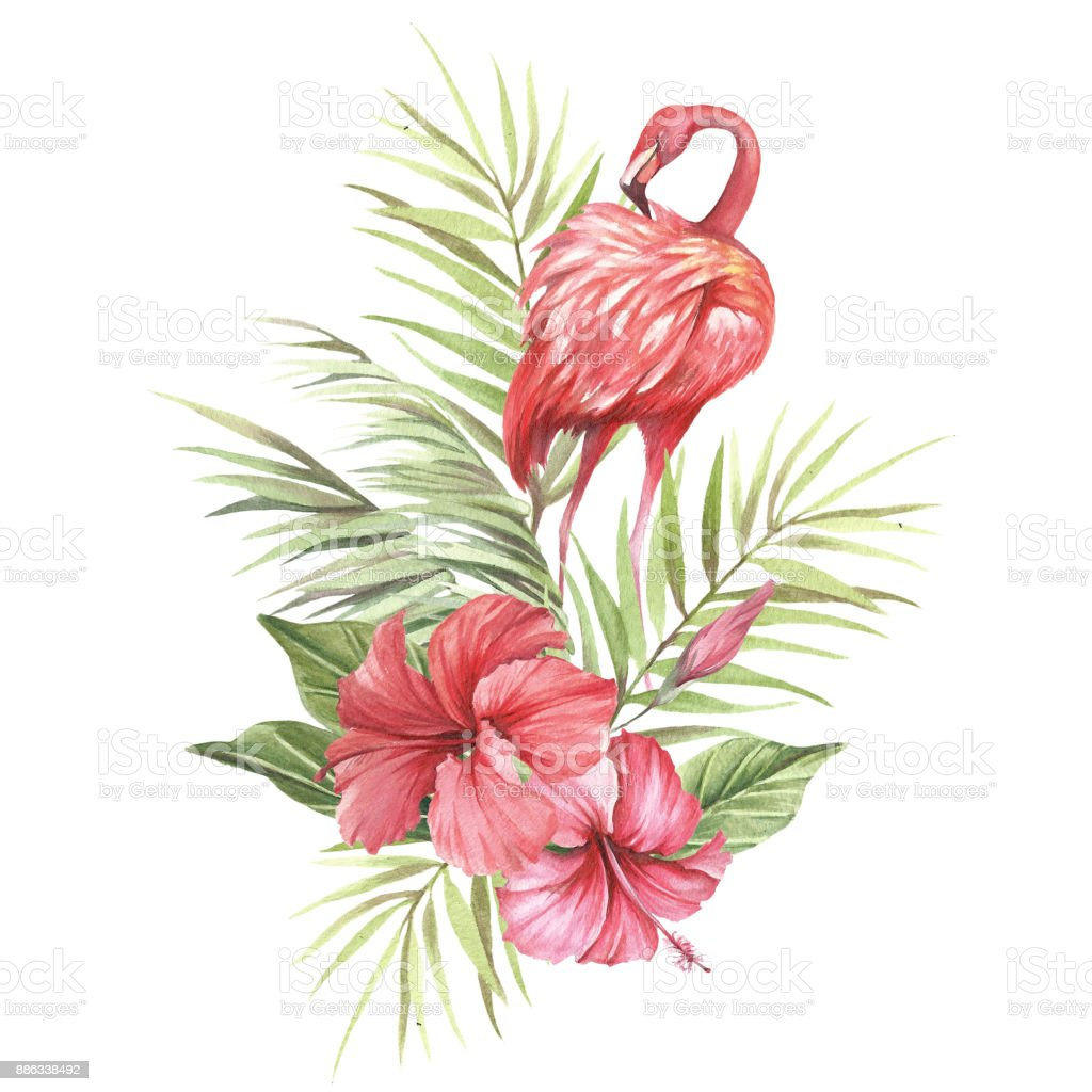 flamant rose avec des fleurs tropicales et de feuilles main dessiner illustration aquarelle. Black Bedroom Furniture Sets. Home Design Ideas