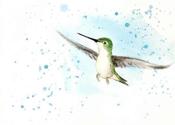Fledgeling Hummingbird vector art illustration