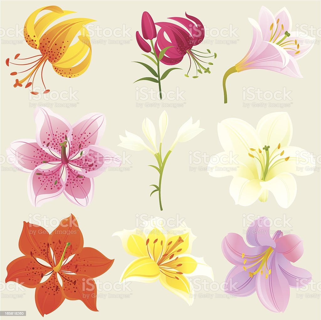 Floral Design Elements (Colourful Lilies) vector art illustration