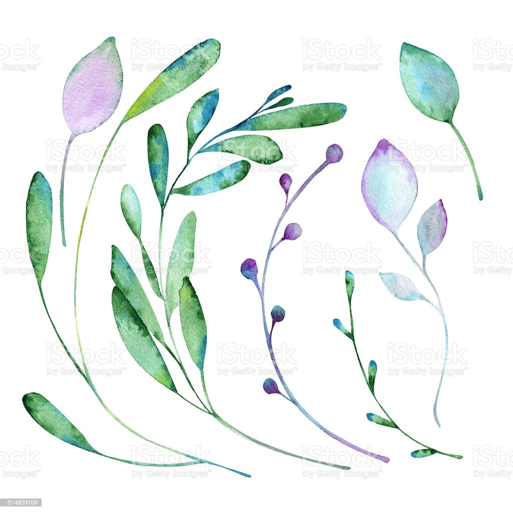 Floral elements paint with watercolors vector art illustration