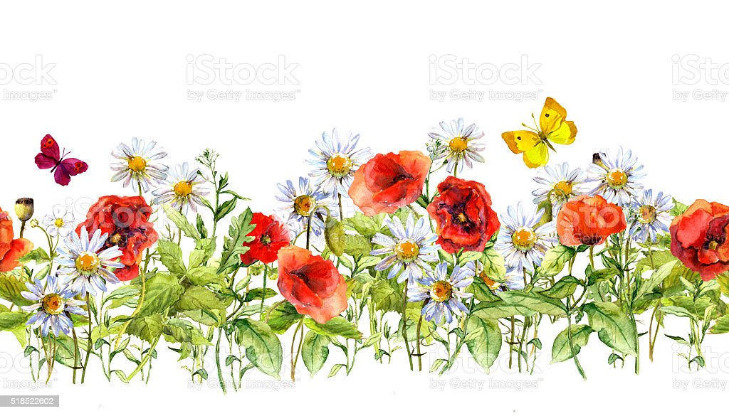 Floral Horizontal Border Watercolor Meadow Flowers Grass ...