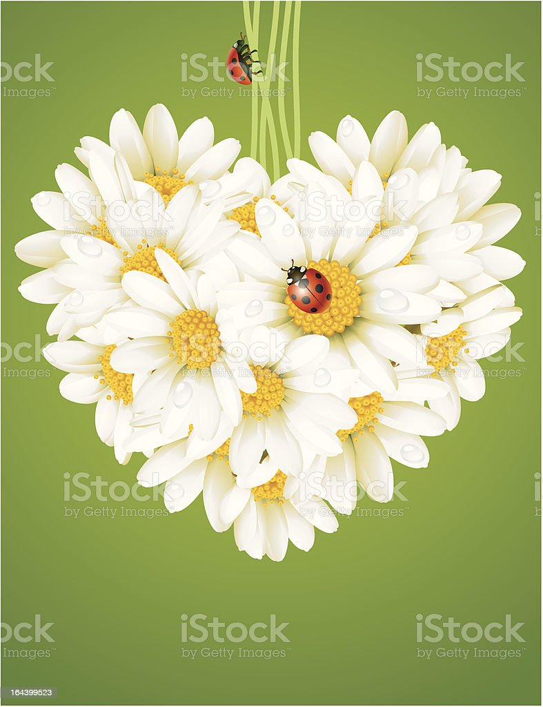 Floral love card (camomile heart) vector art illustration