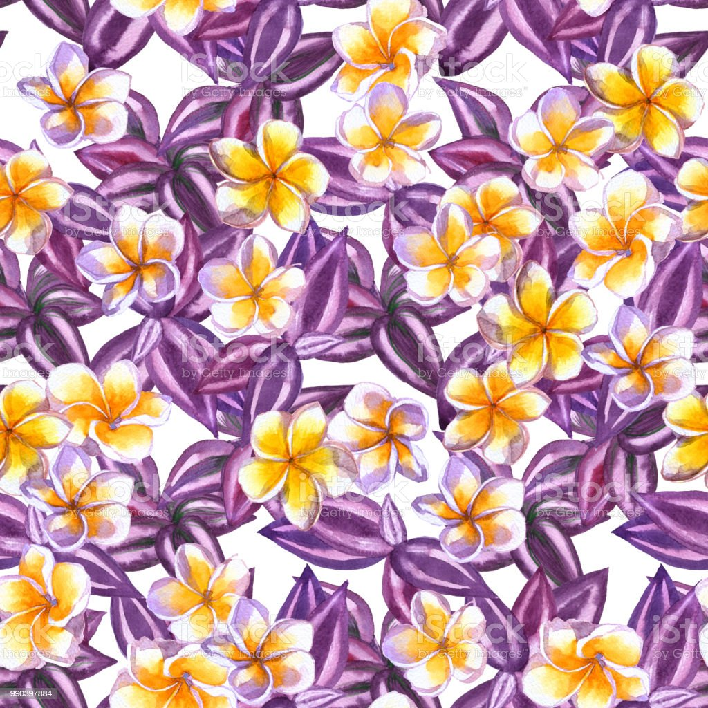 Floral Pattern Tropical Flowers Frangipani Seamless Watercolor