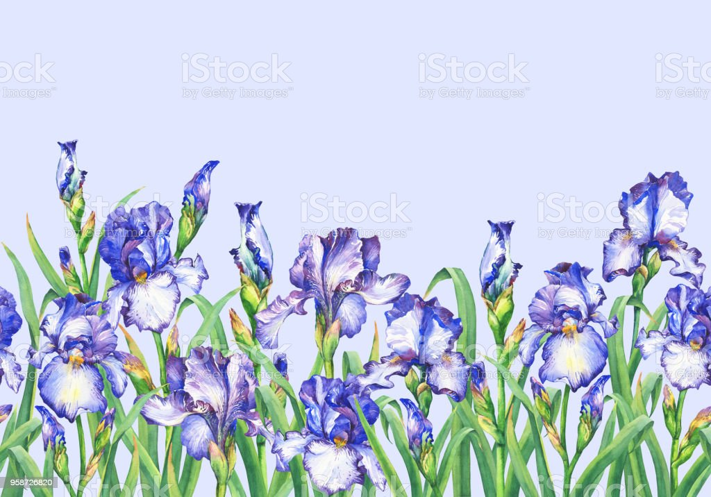 Floral seamless border with flowering violet irises, on blue background. Panoramic horizontal view. Isolated watercolor hand drawn painting illustration. Design for fabric, wrap paper or wallpaper. vector art illustration