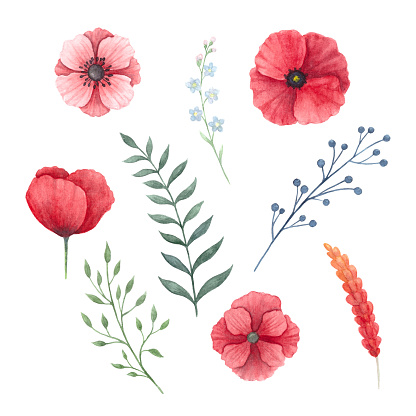 Floral set of poppies and various branches.